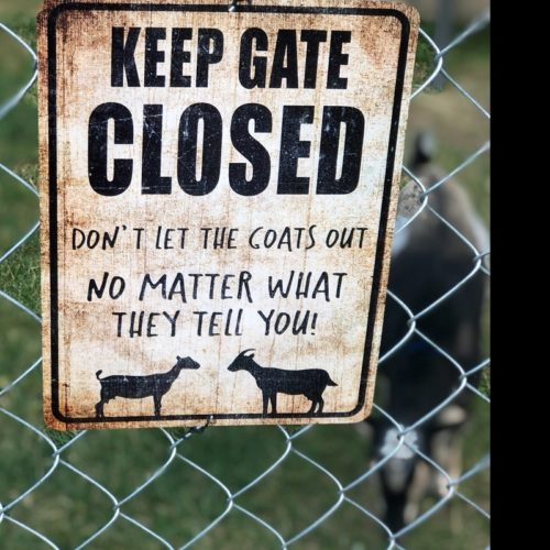 Keep Gate Closed Goat Sign Funny Goat Sign Goat Decor Barn Sign Yard Sign Goat Decor Goat Gift Goat Lover photo review